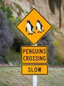 Penguins crossing road  roadsigns — Stock Photo
