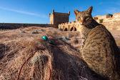 Fishing net and cat in harbor — Stok fotoğraf