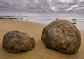 Famous Moeraki Boulders — Stock Photo