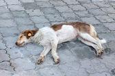 Stray dog — Stock Photo