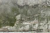 一名设计师涂料中的纹理水泥抹灰 — 图库照片