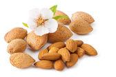 Almond Whith Flower — Stock Photo