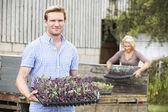 カップルの有機農場での苗の植栽 — ストック写真