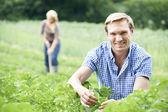 Para pracujących w polu na gospodarstwo ekologiczne — Stockfoto