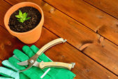 Close-up gardening tools and objects on old wooden background with copyspace — Stok fotoğraf
