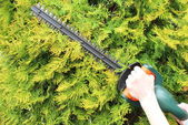 Hands of woman with a gas powered hedge trimmer — Stock Photo