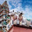 Sacred Cows Guarding an Indian Temple — Stock Photo #48698363