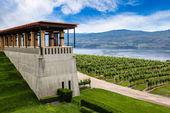 Winery Vineyard in Kelowna, British Columbia — Stock Photo
