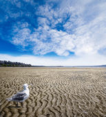 Low Tide at White Rock Beach, British Columbia — Stock Photo