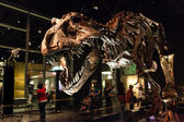 Dinosaur Exhibits at Royal Tyrrell Museum in Drumheller, Canada — Stock Photo