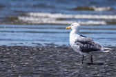 Seagull on Beach — Stock Photo
