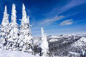 Winter Landscape in Whitefish, Montana — Stock Photo