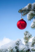 Christmas Bauble Hanging on Pine Tree Branch — Stock Photo