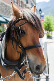 Horse on a Bridle in a Small Town — Stock Photo