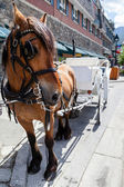 Horse With its Carriage — Stock Photo