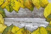 Autumn leafage - abstract natural background — Stock Photo