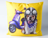 Decorative pillow with dog drawing — Stockfoto