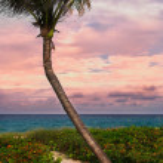 Beautiful palm on a tropic beach. — Stock Photo #49128555