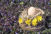 Chicken egg in the flowered bird nest — Stock Photo
