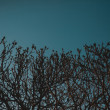 Tree branches against the sky — Stock Photo