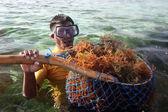 Hasat seagrass'ı — Stok fotoğraf