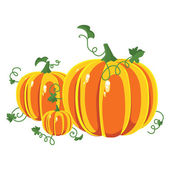 Pumpkin with leaves on a white background. — Stock Vector