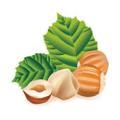 Hazelnuts with leaves. Nuts on a white background. — 图库矢量图片