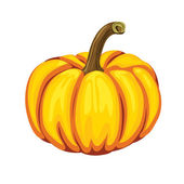 Pumpkin on a white background. Vector illustration. — Stock Vector