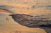 Shoreline at sunset — Stock Photo