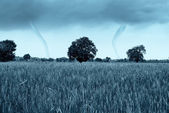 A couple of tornado on a field — Stock Photo