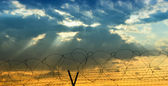 Barbed wire — Foto de Stock