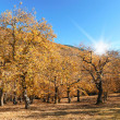 Autumn chestnut trees in the park — Stock Photo #49288957