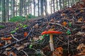 гриб в парке — Стоковое фото