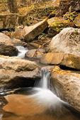 вода в лесу — Стоковое фото