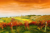Vineyard under red sky — Stock Photo