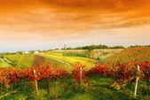 виноградник под красным небом — Стоковое фото