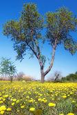 желтый зеленый весной — Стоковое фото