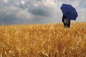 Man into corn field — Stock Photo