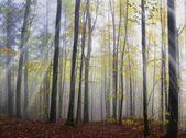 10 月の木 — ストック写真