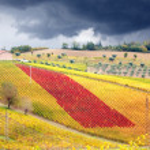 Vineyard in autumn — Stock Photo #50021083