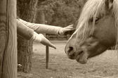 Hand that caresses the horse — Stock Photo