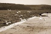 Sea gulls on the pier — Stock Photo