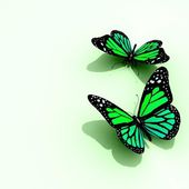 Colored Butterflies — Stock Photo