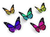 Colorful butterflies design concept — Stock Photo