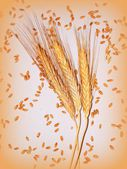 Wheat ears on the white background — Stock Photo