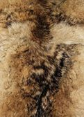 Animal fur. Use for texture or background. — Стоковое фото