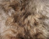Animal fur. Use for texture or background. — Stock Photo