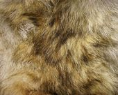 Animal fur. Use for texture or background. — Stok fotoğraf