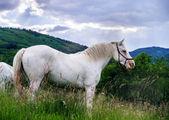 Mooi wit paard in een farm — Stockfoto