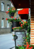 Flower pots hanging at cafe entrance — Stock Photo